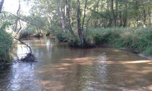 rzeka Czarna Staszowska